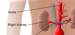 Kidney is a dangerous place to attack in a Knife Fight