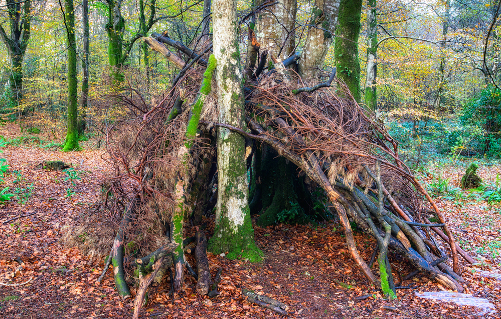 example of survival shelters in the woods