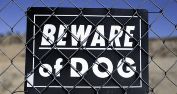 Should You Buy a Security Guard Dog?