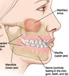 Facial muscles chart