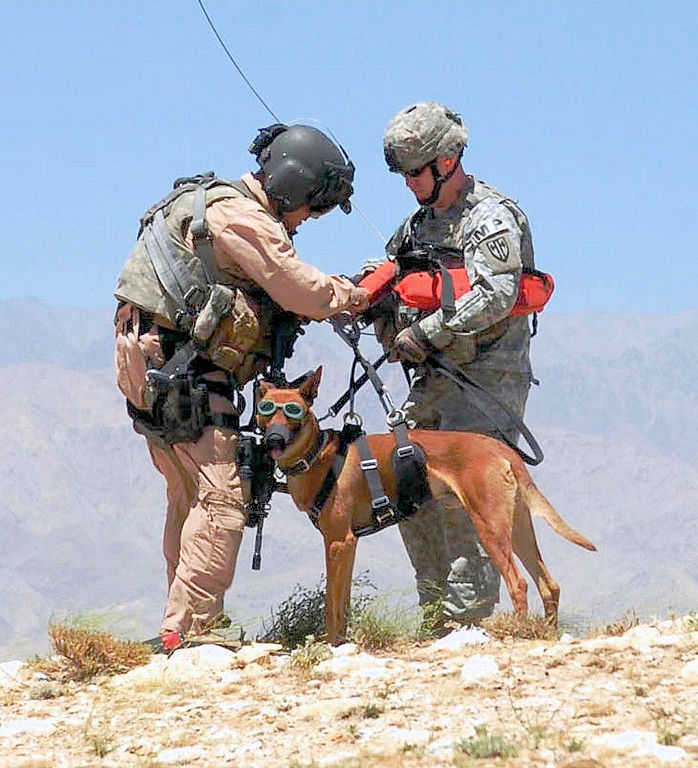 Military dog in Afghanistan being prepared for a helicopter hoist