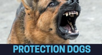 Protection Dogs and Home Security
