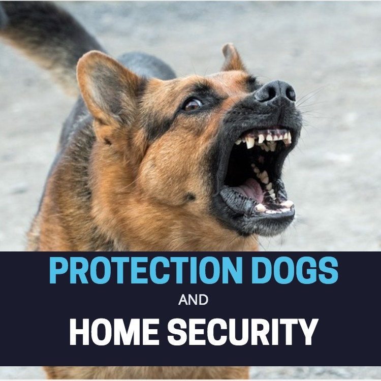 Protection dogs for home security