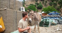 Meet Jack: Using Pack Animals In Afghanistan